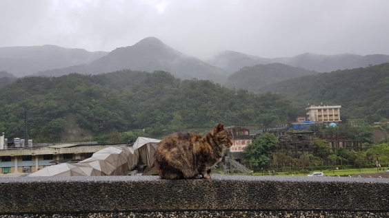 Lonely cat sitting in the rain.