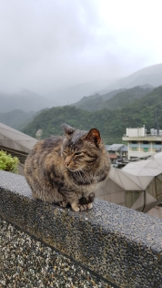Cat sitting in the rain.