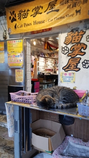 A sleeping cat outside one of the many shops selling cat related products.