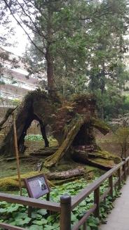 """3 Generations Tree"""