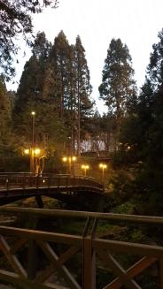Wooden bridge with warm street lights.