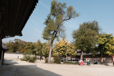 Towering trees in Gyeongbokgung Palace. Seoul, Korea.