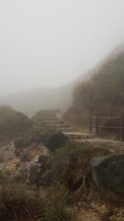 Creepy pathway.